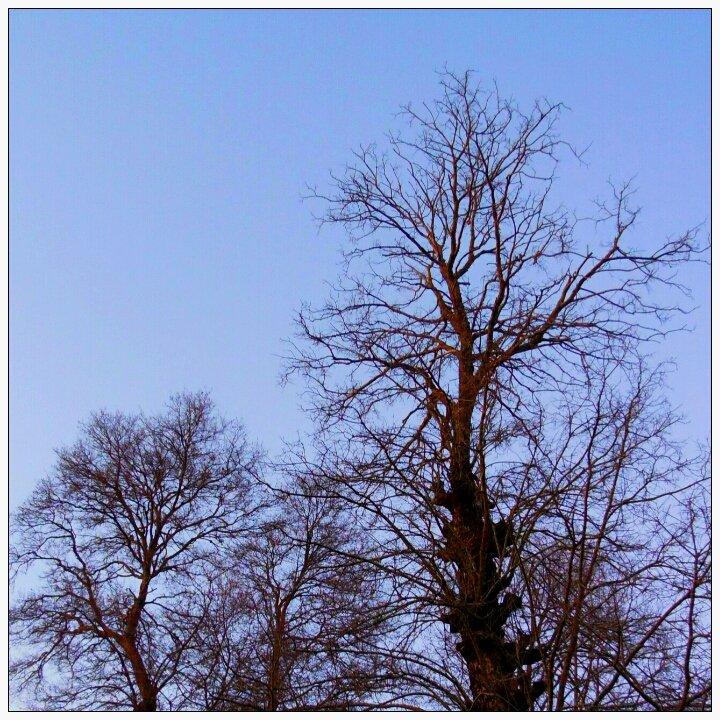 Tree Tree Wall Decal - Nature Vinyl Decor Sticker