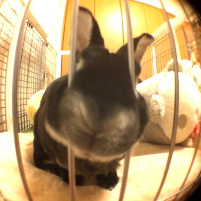 test ツイッターメディア - #rabbit #bunny #minirex #うさぎ #うさぎ? #ミニレッキス #もふもふ #魚眼レンズ #ダイソー  友人からのリクエストにお応えして モモタスの外付けレンズへの猛攻を避けながらの撮影は難易度高かったです https://t.co/nPuAkeL2Pc