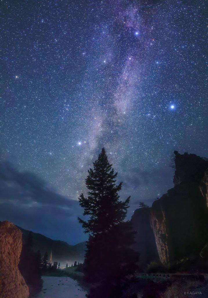 星降る夜のシンボルツリー立ち昇る天の川に夏の大三角。今回の旅の最後の星の夜に撮影しました。(一昨日、アメリカ、ワイオミング州にて撮影) pic.twitter.com/FASzz358cX