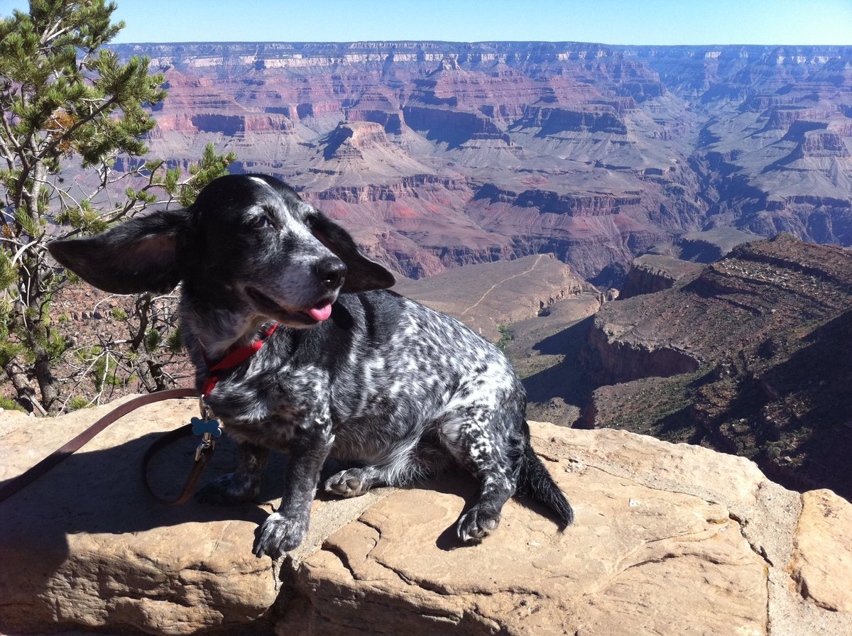 @dog_rates Here's @Rhapsadog, a pointer/bassett mix, at the Grand Canyon back in 2010. https://t.co/bkqXsKiMJb
