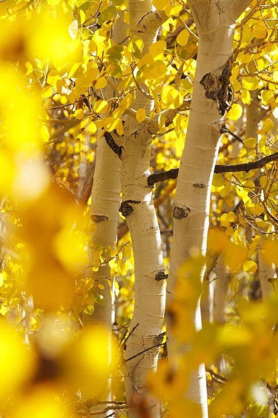 подделки на золотую осень картинки