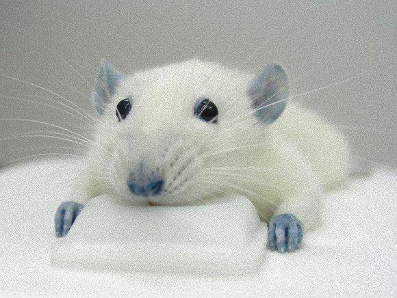 【RT10400UP】 食用色素「青色1号」で神経炎症が緩和されることが判明。ただし副作用として体が青くなる https://t.co/JWVCEjH8wQ