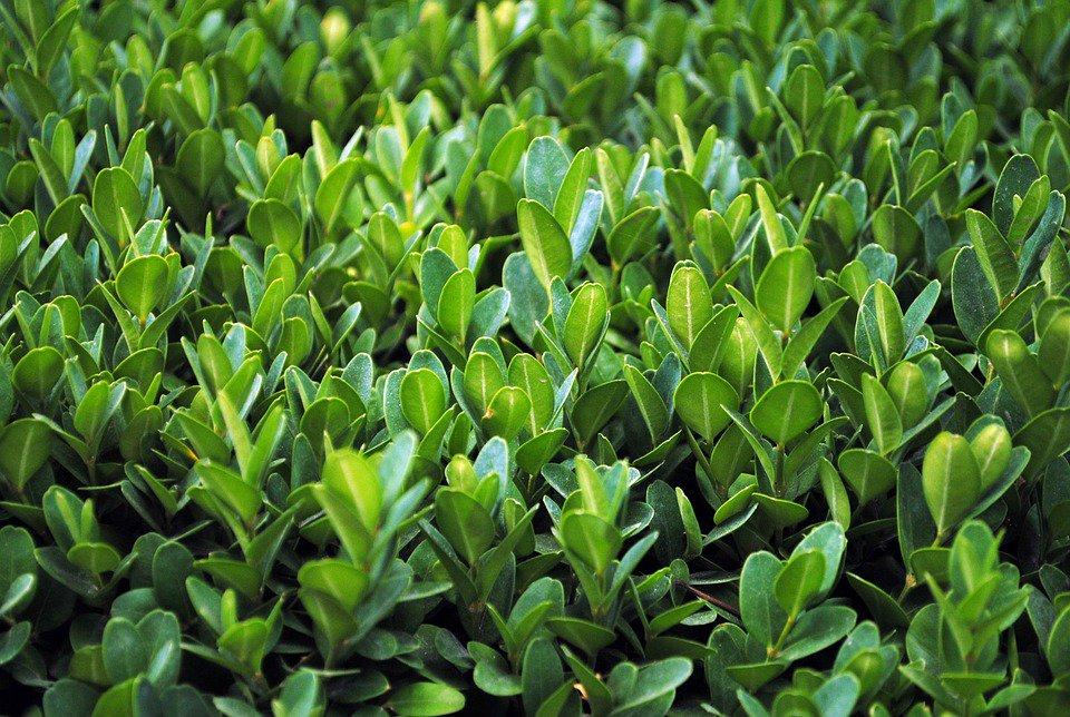 Plant - Springer