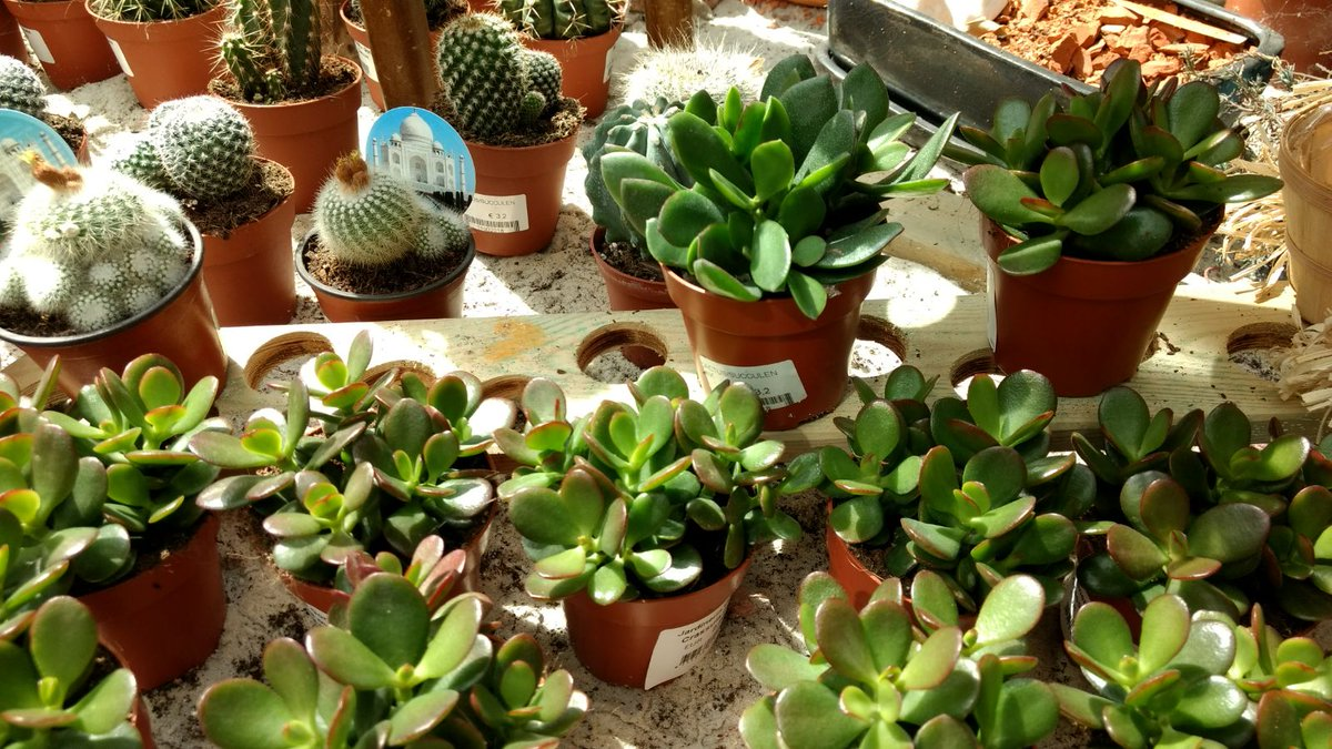 Solutions Mazatlan Real Estate: Indoor plants that bloom all year round