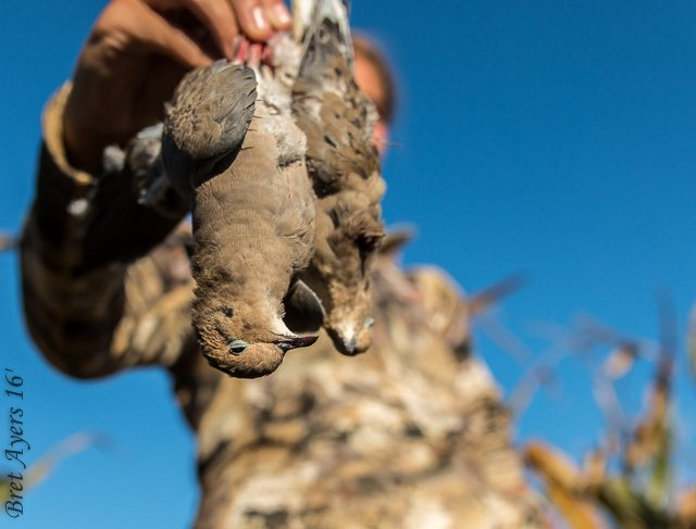 RT if you're gettin' some doves this weekend! Picture: @AyersBret