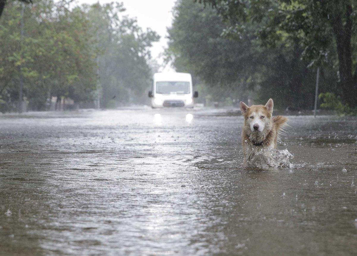 All of Houston says: SAME.   Awesome photo by our @egconley #Harvey #houwx @HoustonChron https://t.co/xHoNFEMk0p