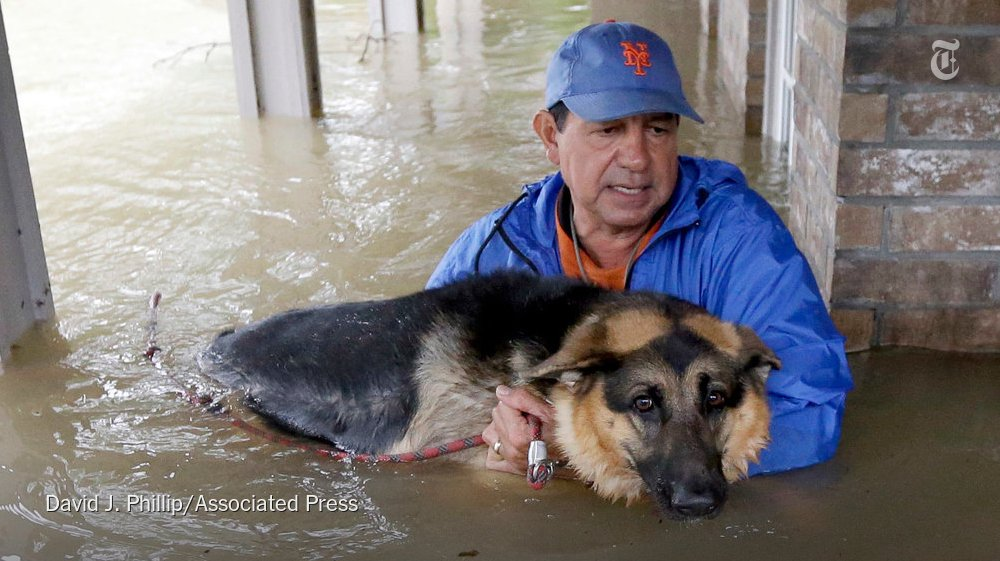 "For many in Harvey's path, leaving pets behind is ""not an option"" https://t.co/9faJZyUWog https://t.co/Omr1Dgs0mE"