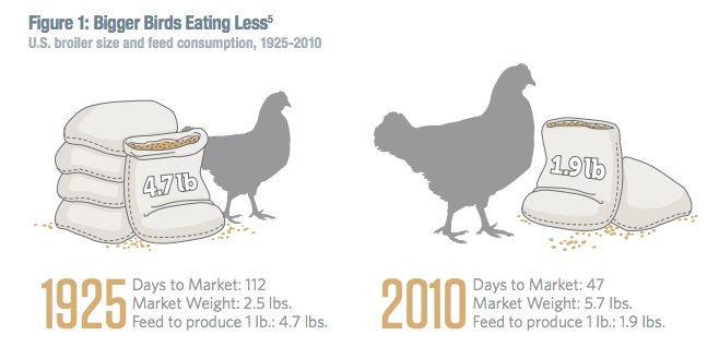 Adam Tooze On Twitter Astonishing Change In The Broiler Chicken As