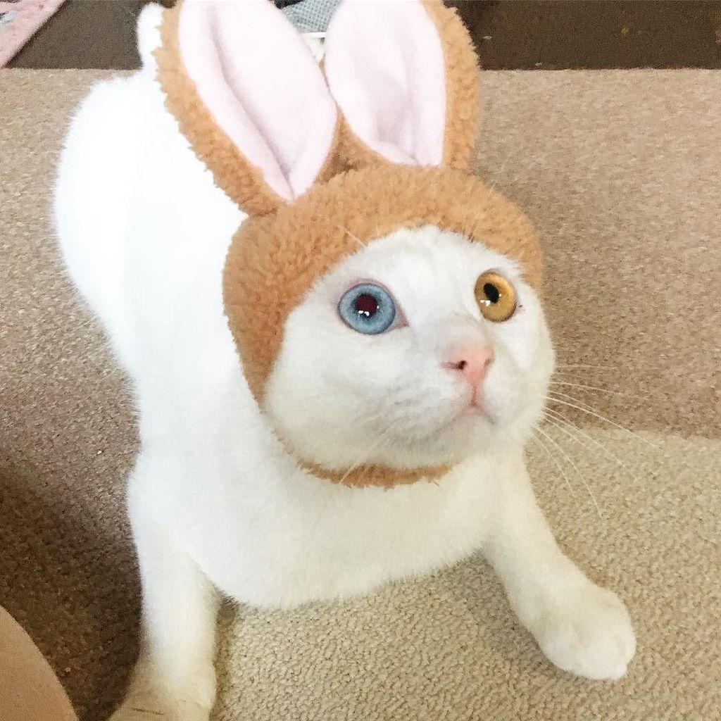 ... 兎でいい #猫うさぎちゃん #白玉#白猫#しろねこ#オッドアイ#猫#ねこ#ネコ#ぬこ#にゃんこ#cat#kitty#保護猫#癒し#動物#…  http://ift.tt/2vAzYYO pic.twitter.com/ ...