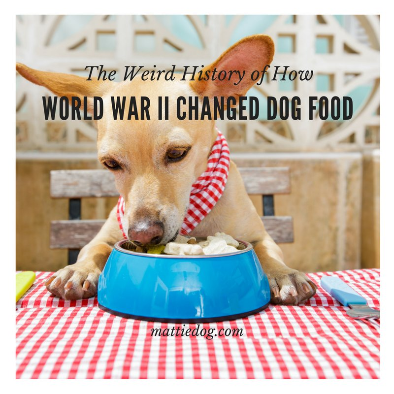 Okay, this is weird-oh! Check out the bizarre history of dog food! #dogfood https://t.co/9t0veZ6VrO https://t.co/SGVUPm4cwx