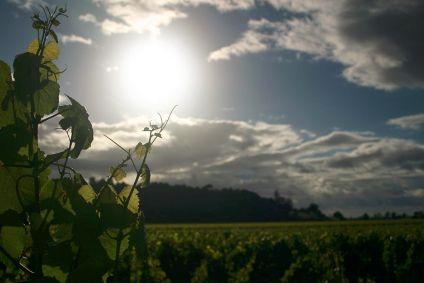 #NewZealand #wine exports hit record high - figures  https:// buff.ly/2x1gDDL  &nbsp;    #Premium #InternationalReputation #nzwines #theyknowtheirstuff <br>http://pic.twitter.com/JXPM0aBzcT