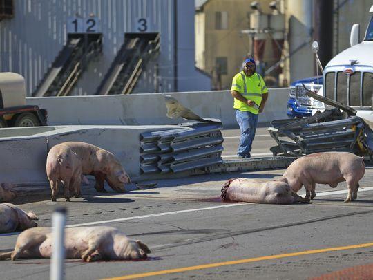 Truckload of pigs killed on I-64 in Louisville won't be forgotten thanks to #PETA billboard  https://t.co/DEPOT1DRII https://t.co/djJe5roWK1