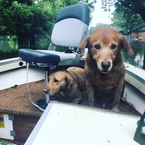 UPDATE: Frankie & Bear are safe. The two dogs we saw sitting in a boat in a flooded neighborhood have been rescued… https://t.co/HOX03V5Typ