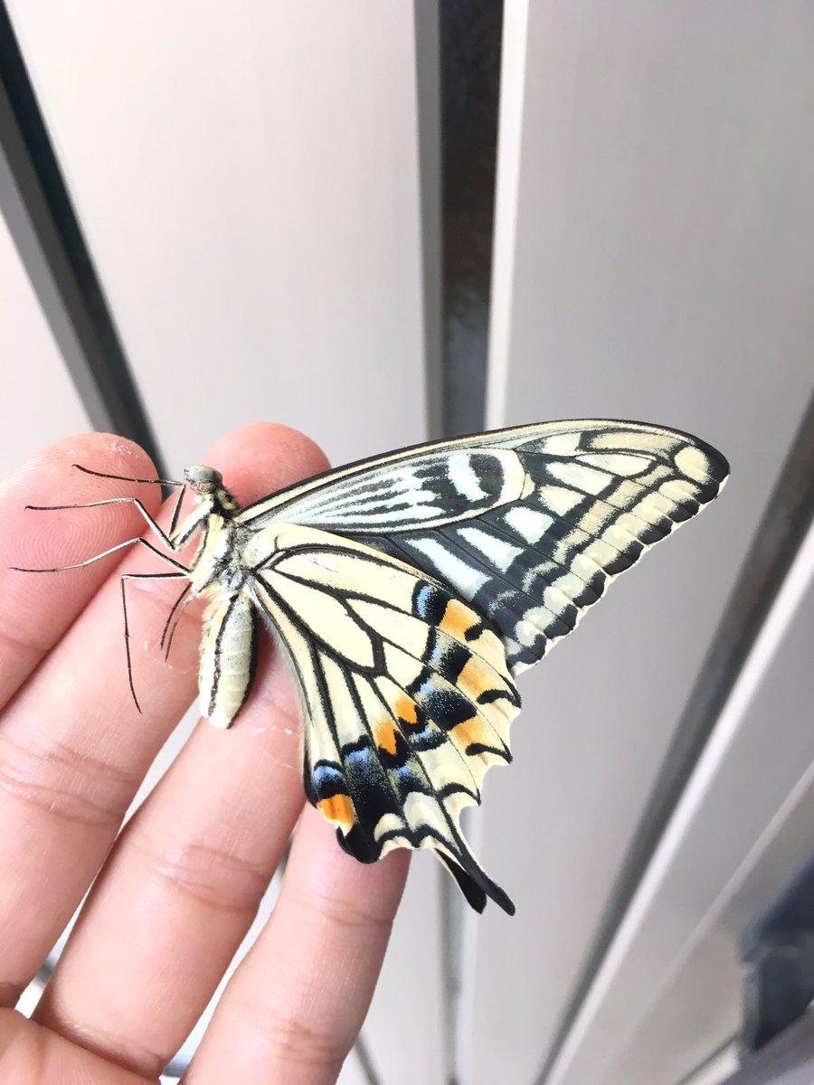 この蝶何かがおかしい?顔をよく見たら普通の蝶と違う顔に驚きを隠せない!