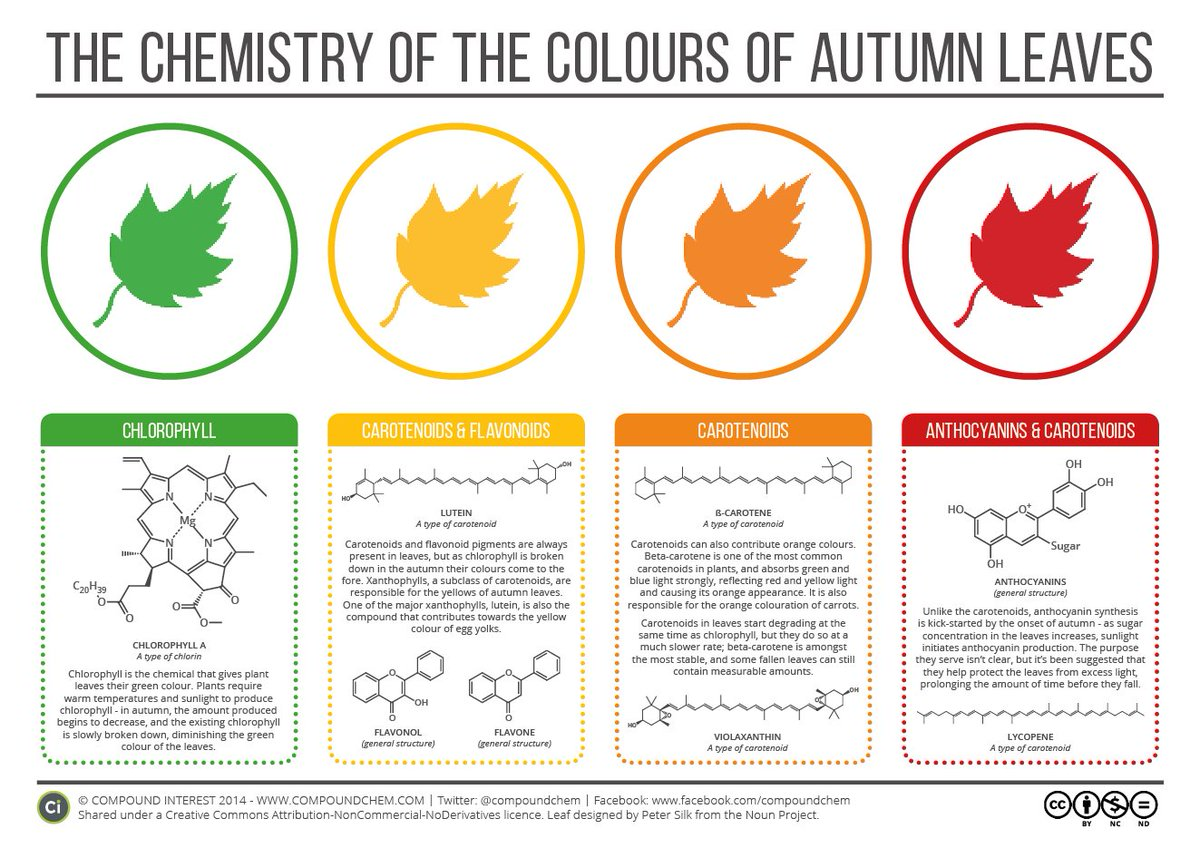 A lovely graphic from @compoundchem about the chemistry of autumn colours. #AutumnIsComing https://t.co/eaG0pi3C5L https://t.co/mZNFzThMjY