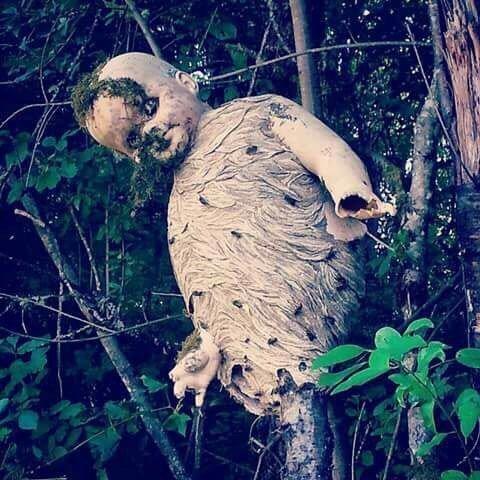森に打ち捨てられた人形にできたスズメバチの巣が怖すぎる