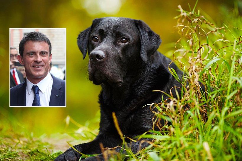 Le chien d'Emmanuel Macron découvre Manuel Valls caché depuis trois mois au fond du jardin de l'Élysée https://t.co/KHIbHtlGVv