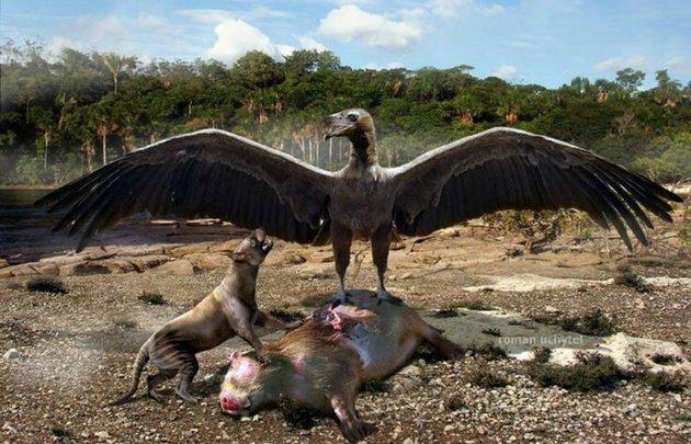 """Encontraron restos del """"ave del terror"""" en Mar del Plata"""