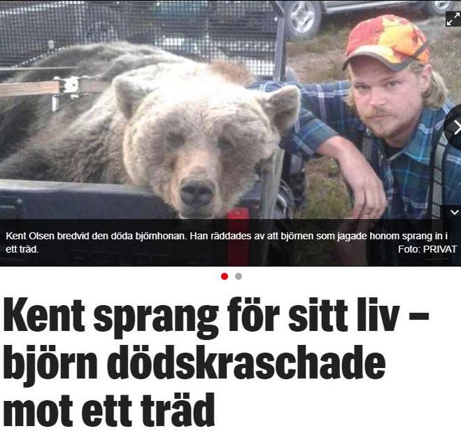 björnar dating Storbritannien