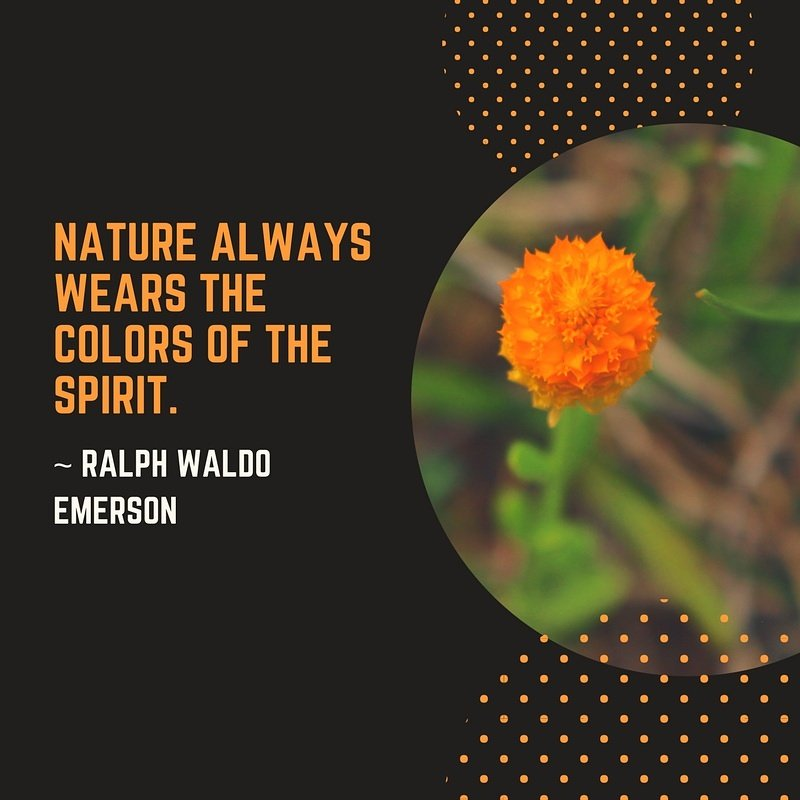 according to emerson nature wears the colors of