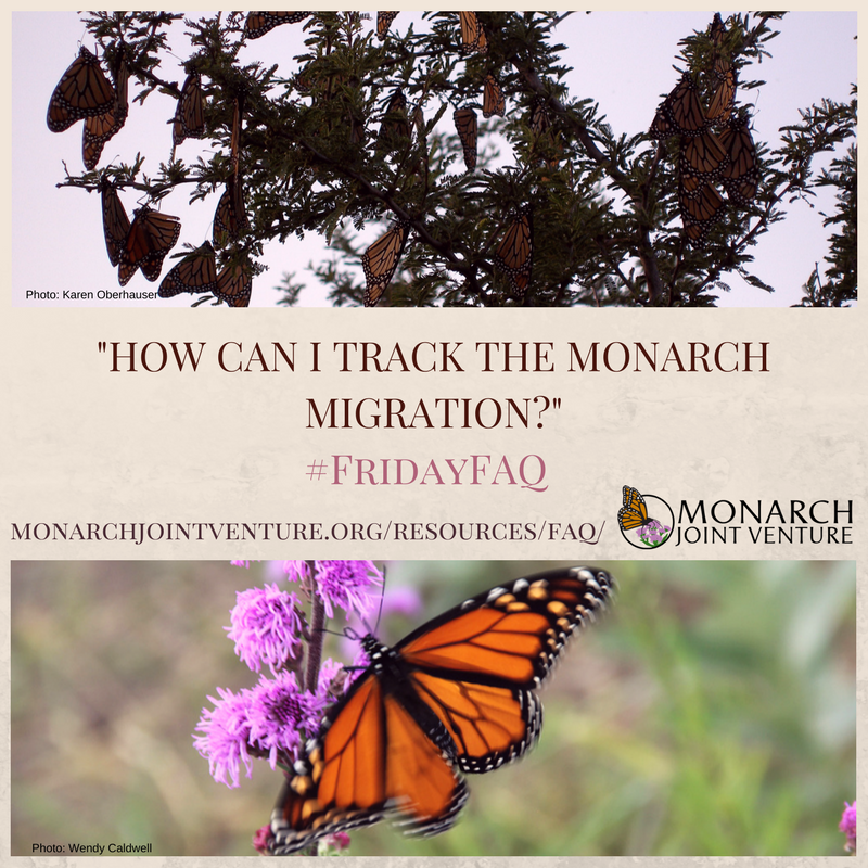 Wondering how you can keep track of the #monarch #migration? Participate in #citizenscience! #FridayFAQ More info:  https:// monarchjointventure.org/resources/faq/ track-the-migration &nbsp; … <br>http://pic.twitter.com/Z0n8qSZ2XN