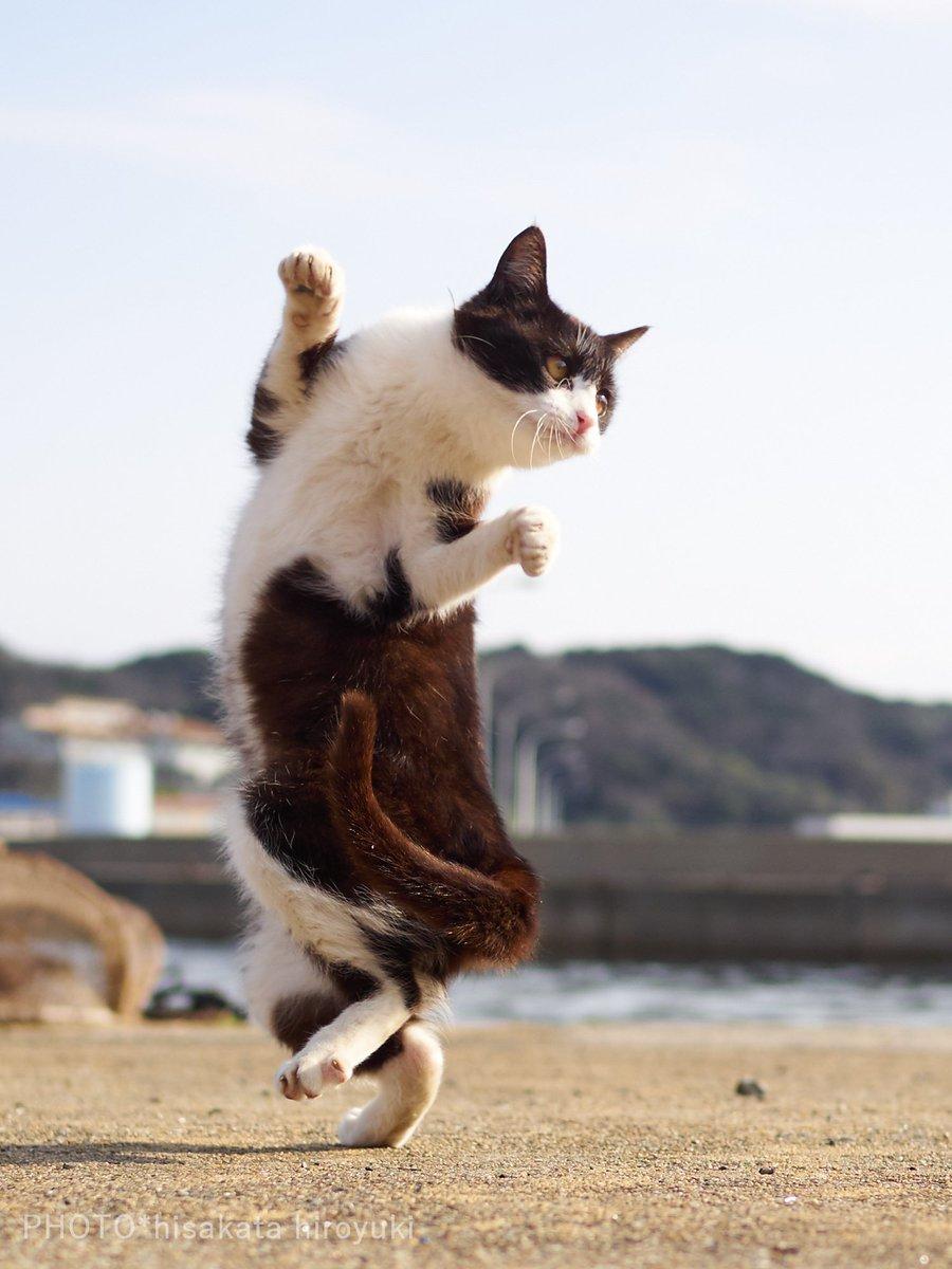 картинки с котами ура пятница необходимости устанавливают дополнительный