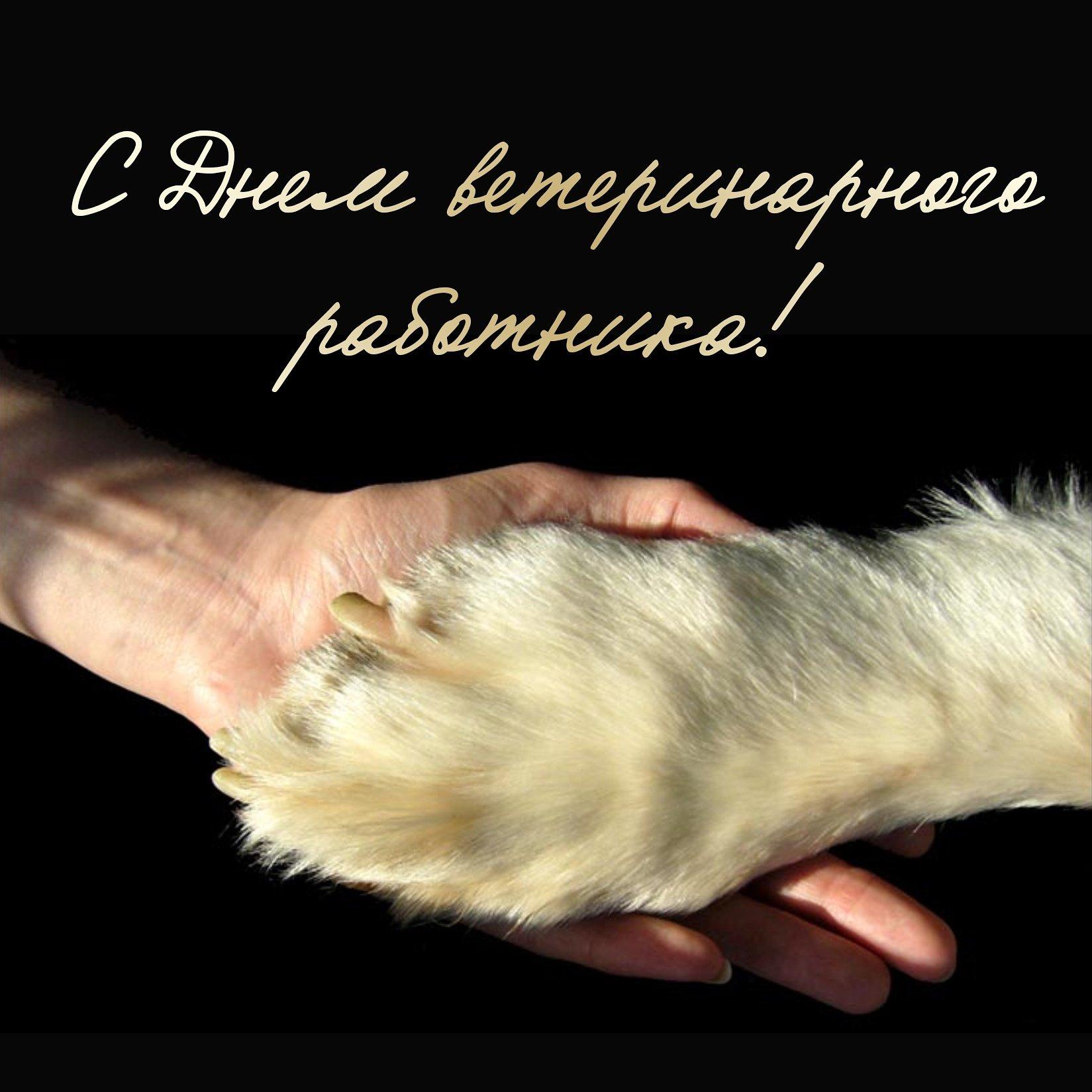 Поздравления в картинках с днем ветеринарного работника