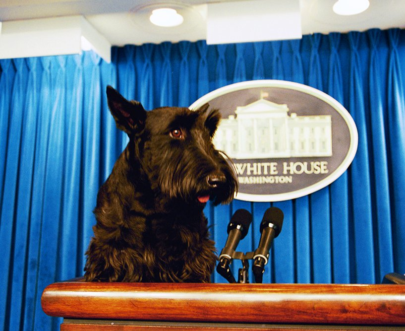 "GeorgeWBush Library on Twitter: ""#ArchivesCUTE First Dog Barney ..."