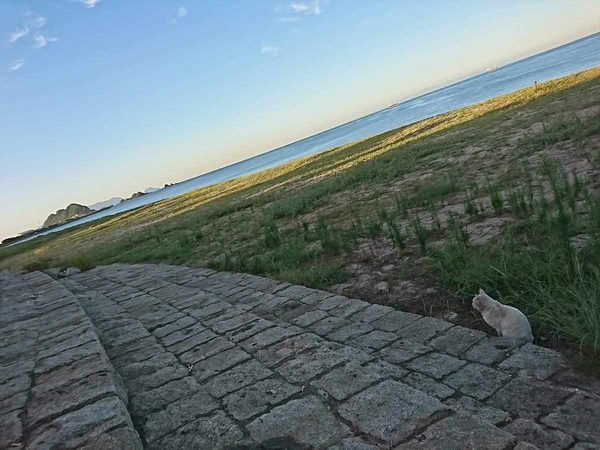 最近朝は寒いね~  今日も虹ヶ浜に行ったら猫がよってきたから朝飯のメロンパン上げたらあまりおきに召さなかったみたい笑 https://t.co/q70pDdgsqG