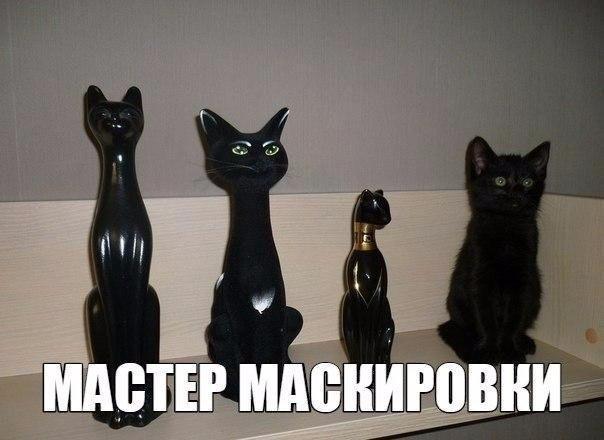 картинки про животных коты
