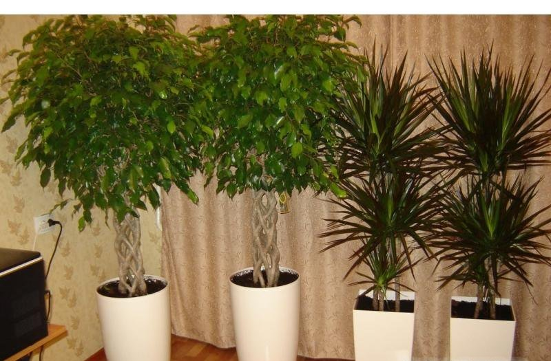 селекция растений в фото