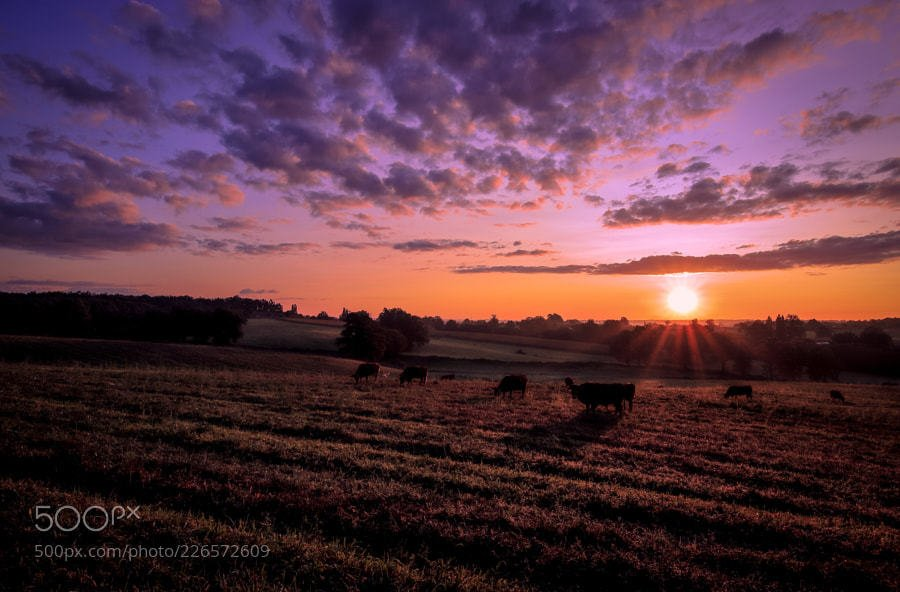 Popular #photography on #500px : cows at sunrise... by paroq https://t.co/lYhQi3eH6A