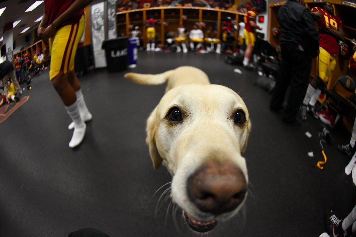 Jake Olson's guide dog, Quebec, got in on the postgame celebration! #FightOn