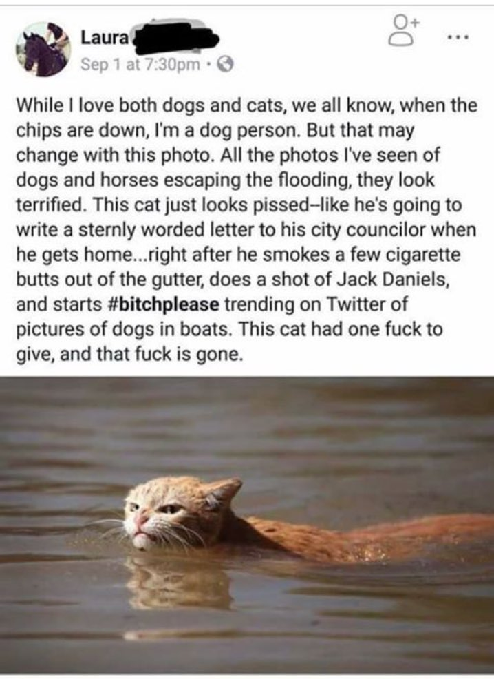 """Badass Harvey Cat had """"one f--- to give, and that f--- is gone.""""  Whoever wrote this deserves a Nobel Prize https://t.co/h9pUfcLx0d"""