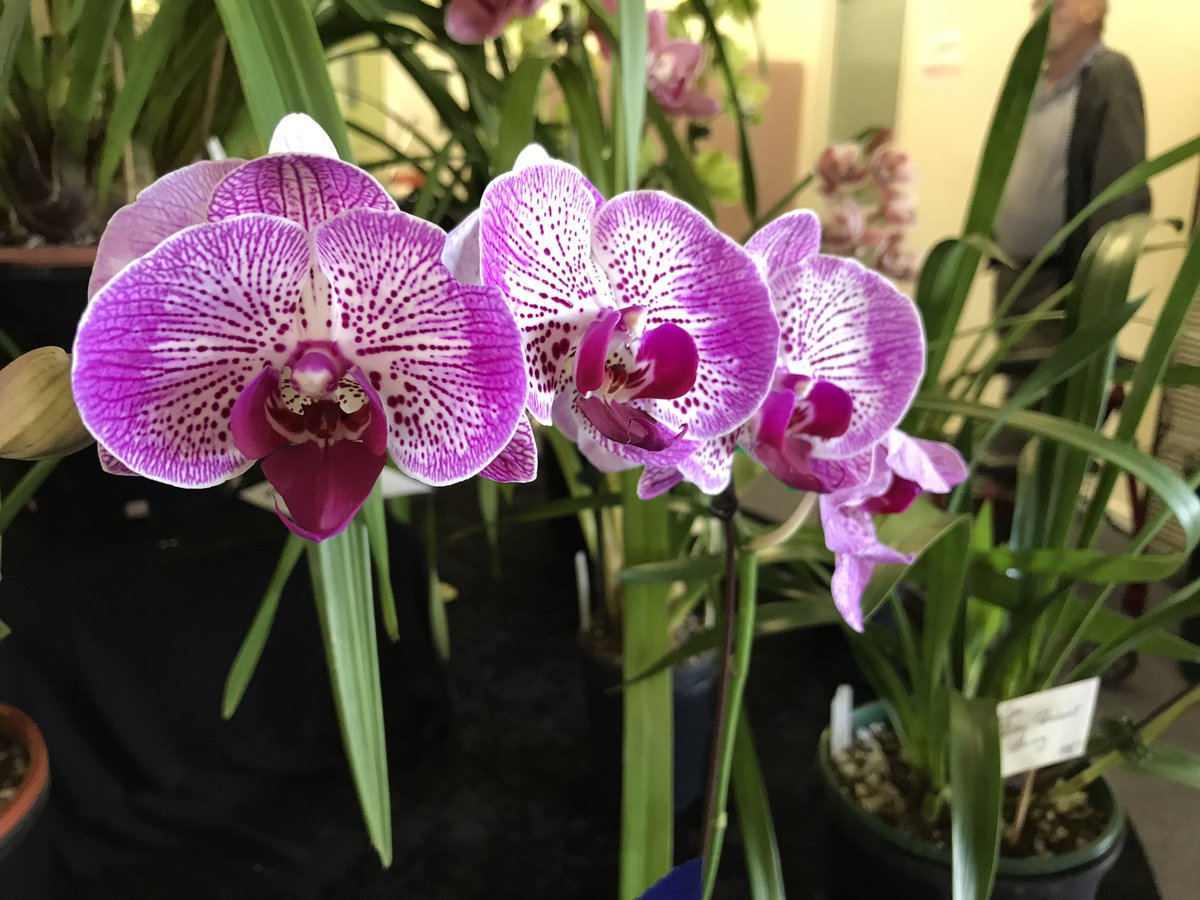#Orchids galore at #Kialla Paceway for the Spring Spectacular. Catch the exotic beauties with @BruceRobertsWIN @WINNews_She 6pm #ch8 <br>http://pic.twitter.com/YH7ig46569