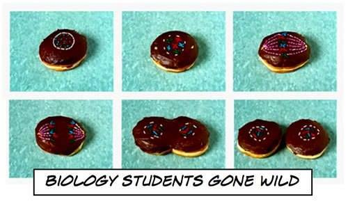 Cell division, donut style....  #cells #biology #sciencefunny  via google images<br>http://pic.twitter.com/adCZJStRDx