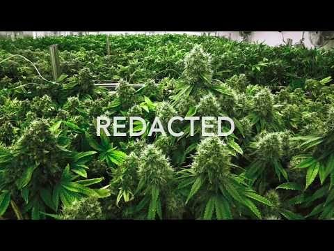 Why is Pa.&#39;s medical marijuana program so secretive?  http:// weedclub.com/tpyll  &nbsp;   via @PennLive #Pennsylvania #Politics #transparency #herb <br>http://pic.twitter.com/2GtTFD96Hp