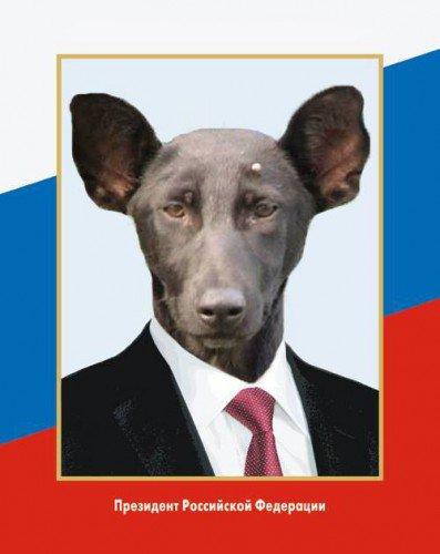 """""""Путин - не собака?"""": в Берлине пикетировали посольство РФ с протестом против кремлевской пропаганды и вмешательства в выборы в Германии - Цензор.НЕТ 2923"""