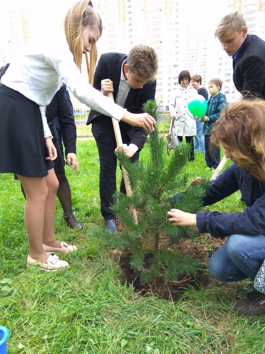 день приняли участие в акции посади дерево большая