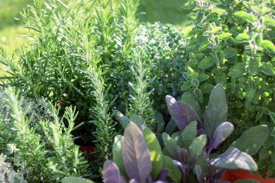 Intuitive Healing and the Taste of Herbs September 25th, 2017 New Orleans, LA  _________________________________ #herb #herbs #medicine<br>http://pic.twitter.com/JixDmTWZ80