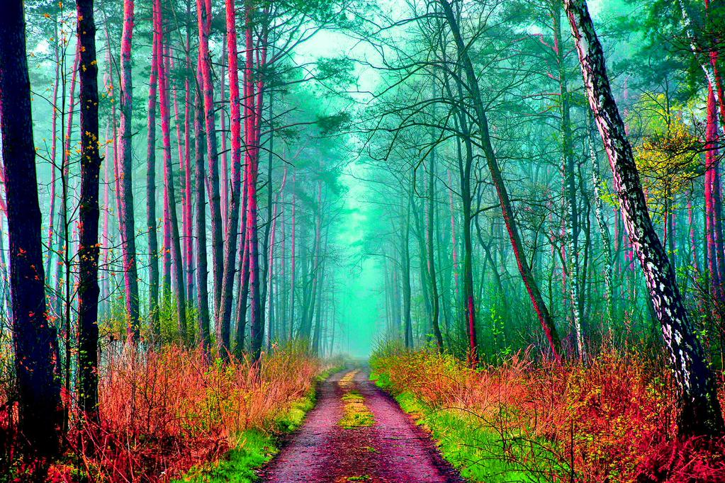 Multicolored #Forests say goodbye to #Summer #Planet #Earth <br>http://pic.twitter.com/VCjswAC6a2