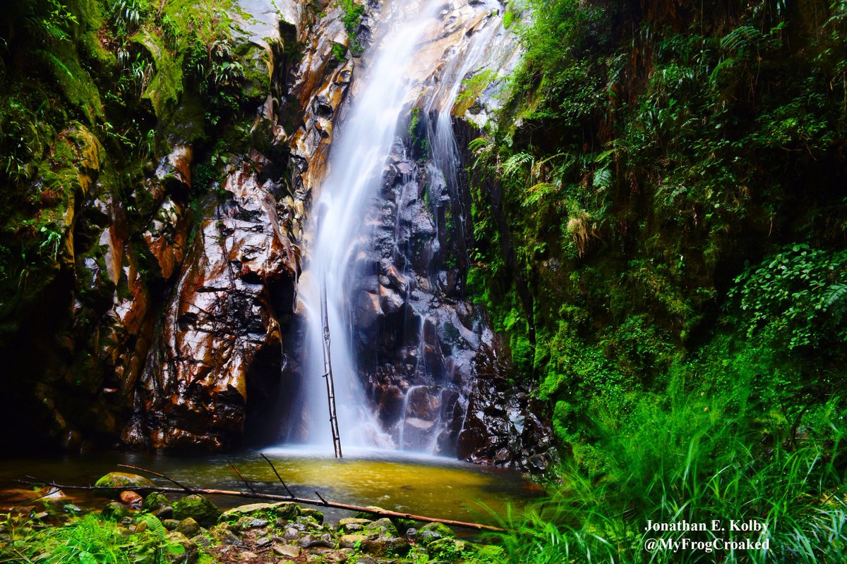 This #waterfall is home to all 3 endangered frog species that #HARCC is working to protect at @HondurasARCC  http://www. frogrescue.com/the-species/  &nbsp;  <br>http://pic.twitter.com/15qUHd8qSb
