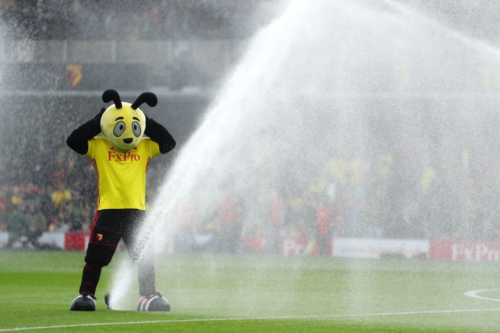 Watford's mascot absolutely taking the piss here #WATMCI https://t.co/MsOnGuR7EF