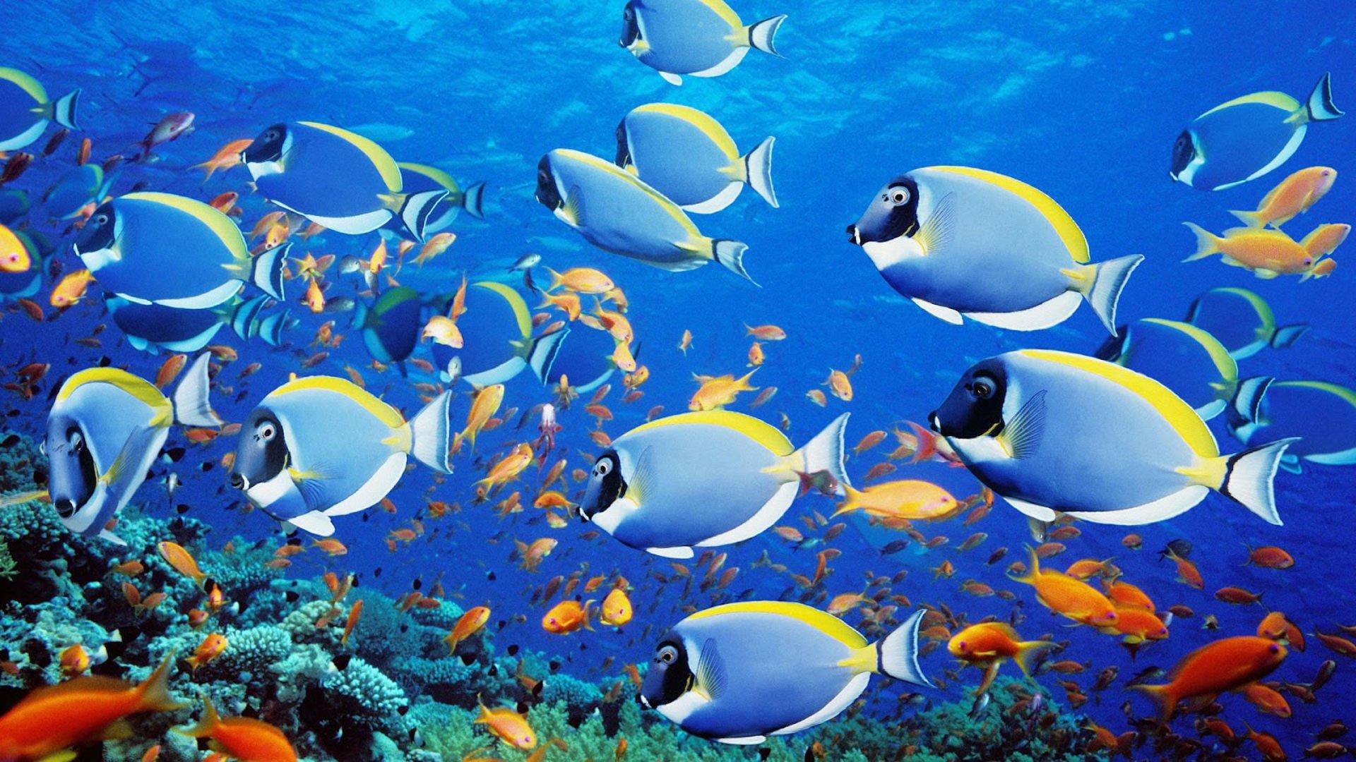 Днем, картинки на рабочий стол рыбки живые они двигаются
