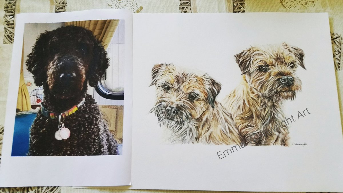 One portrait out to the framers and a new one on the drawing board #borderterrier #labradoodle #animalart #petportrait #Yorkshiredales <br>http://pic.twitter.com/e32Ssitpt6