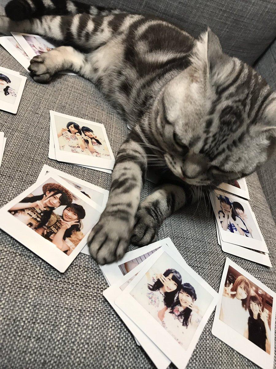 選挙公約のツーショットチェキを整理していたら、、  猫タロット占い師が占いをはじめました🔮  こんに…