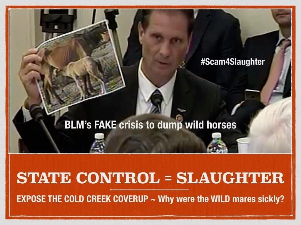 keep #wildhorses fed. protected.  There&#39;s no overpopulation &amp; none starving. he wants land 4 #beefindustry #bigoil<br>http://pic.twitter.com/3NwW6veLZn