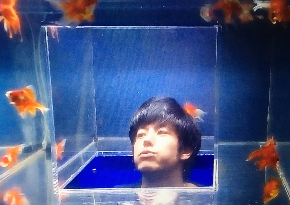 たいへん!金魚がいっぱいだよ!>* ))))><