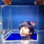たいへん!金魚がいっぱいだよ!>* ))))>< pic.twitter.com/…