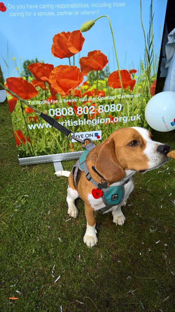 #poppydog we like to see dogs with the poppy #royalbritishlegion #airshow #insouthport #southportairshow #poppy<br>http://pic.twitter.com/dDLF5oeRTn